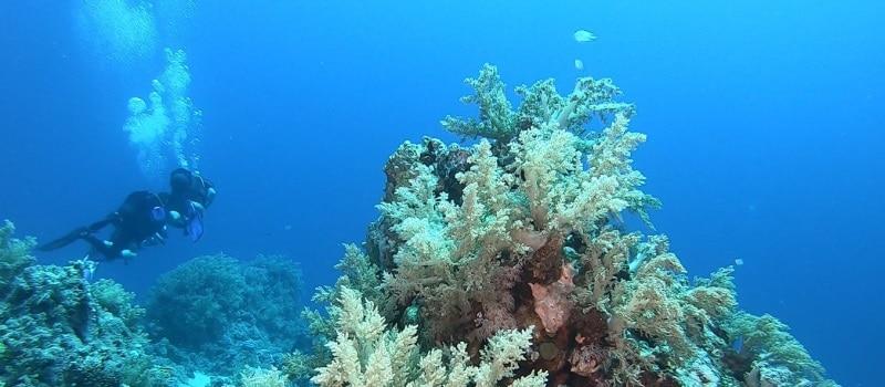 hsa open water scuba diver kurs nurkowania dla niepełnosprawnych
